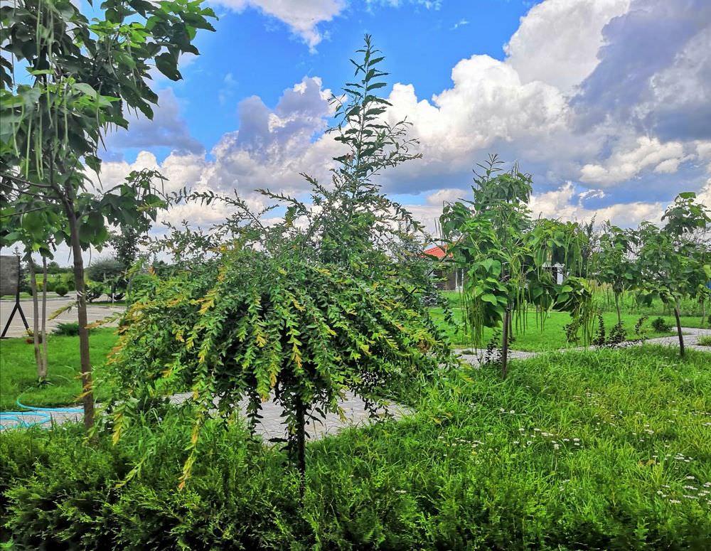 Озеленение поселка